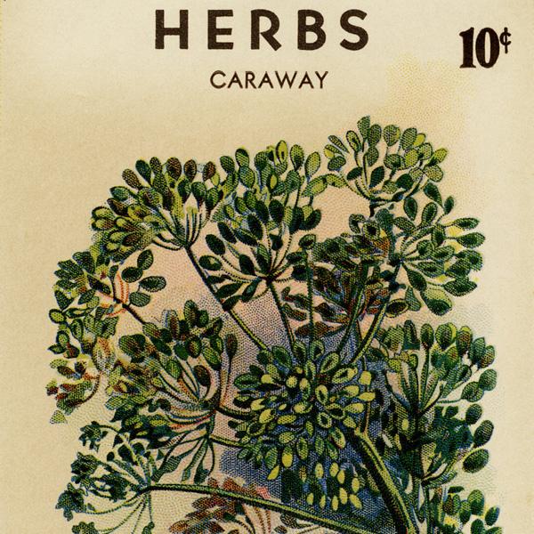 caraway seed packet, free vintage image, old seed packet, roudabush's seed packet, vintage gardening image, vintage herbs seed packet, vintage seed packet