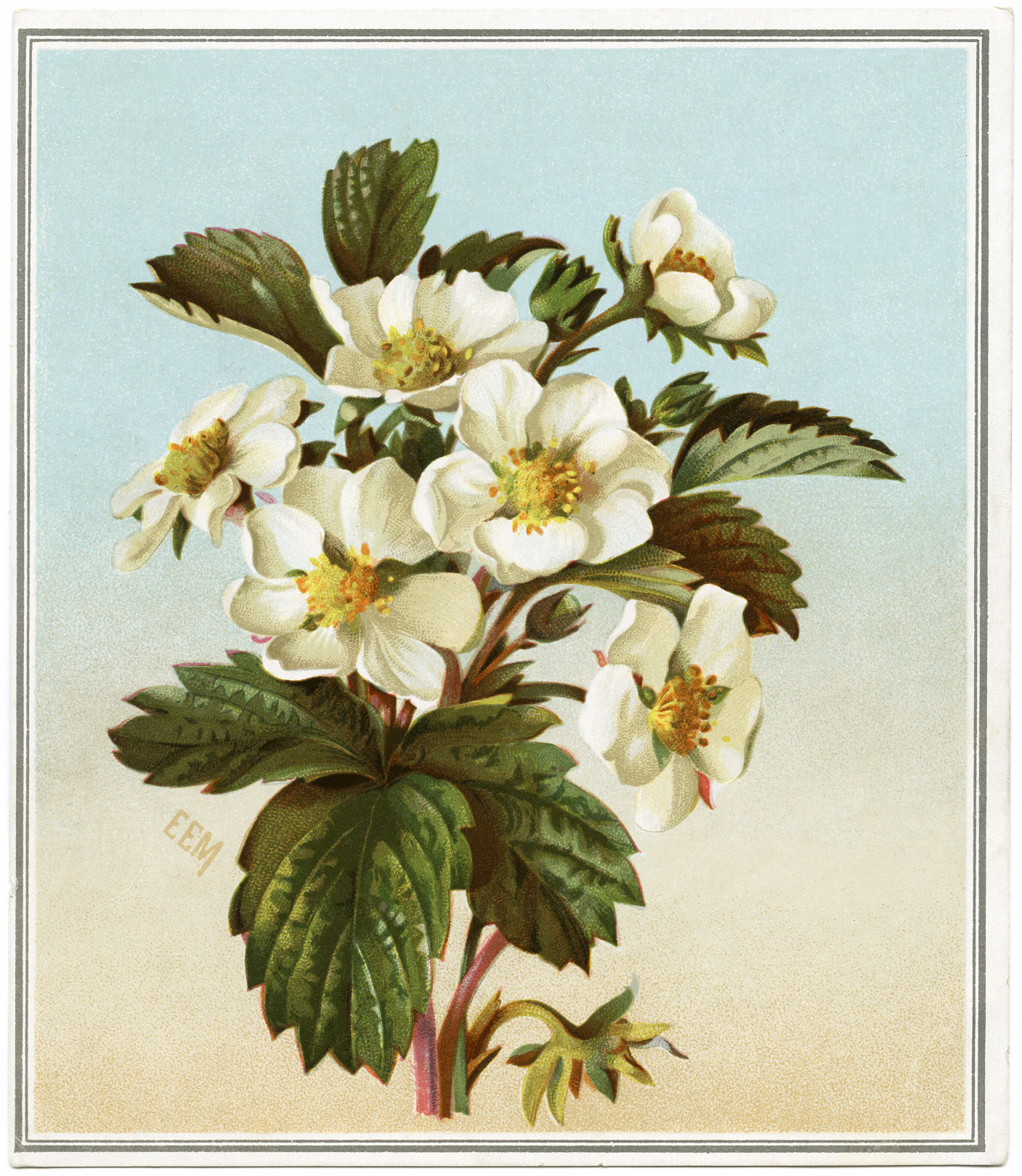 FREE Digital Image Flowering Strawberry Victorian Card
