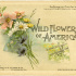 Free Vintage Image ~ Wild Flowers of America Cover 1894