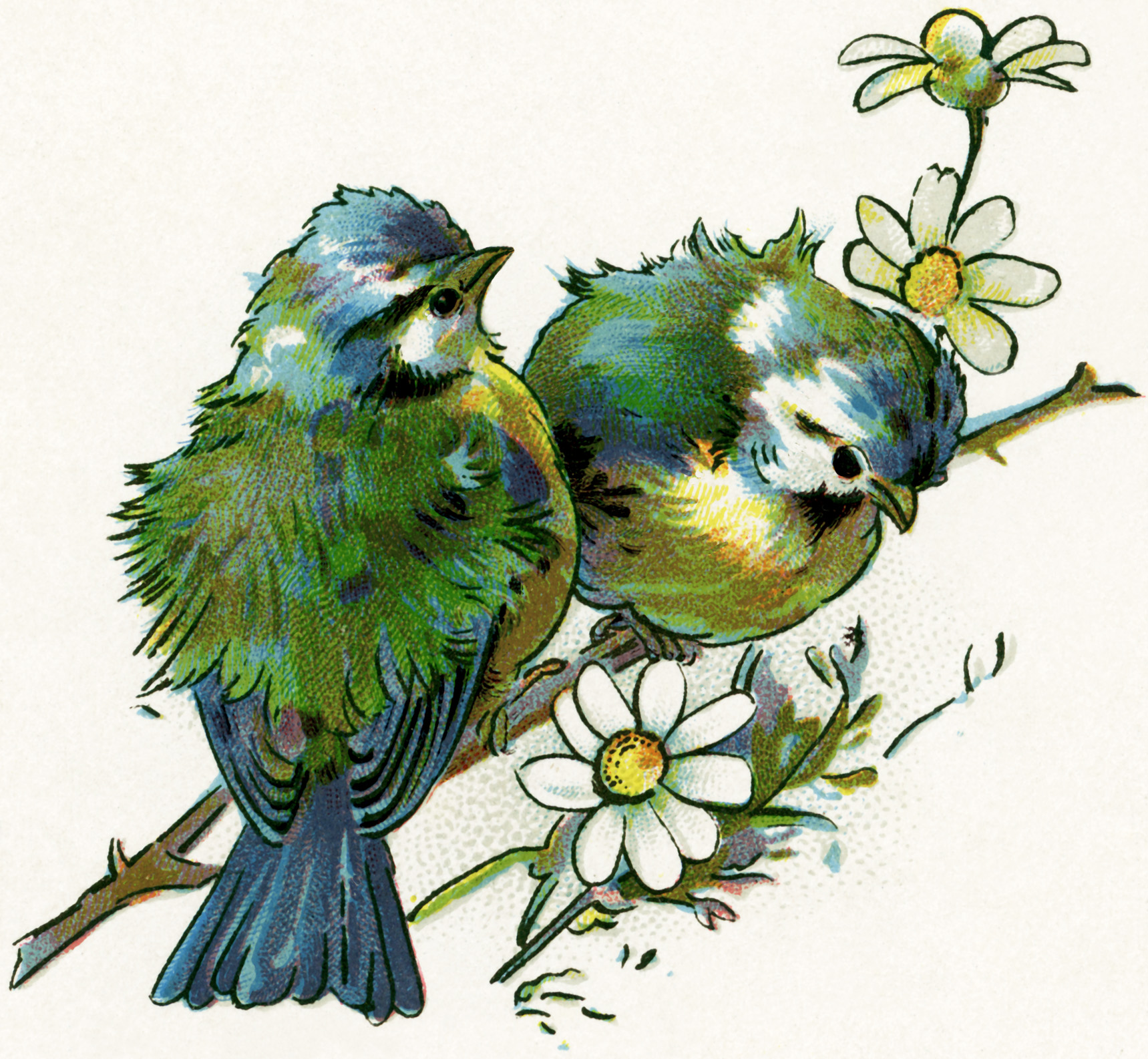 free clipart of vintage birds - photo #16