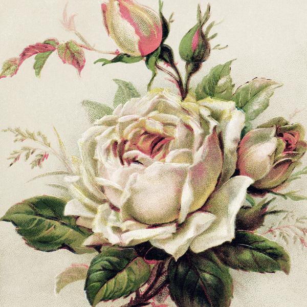 free vintage image, german birthday postcard, white rose image, free digital floral graphic, herzlichen gluckwunsch zum geburtstage, vintage rose postcard, old postcard flowers