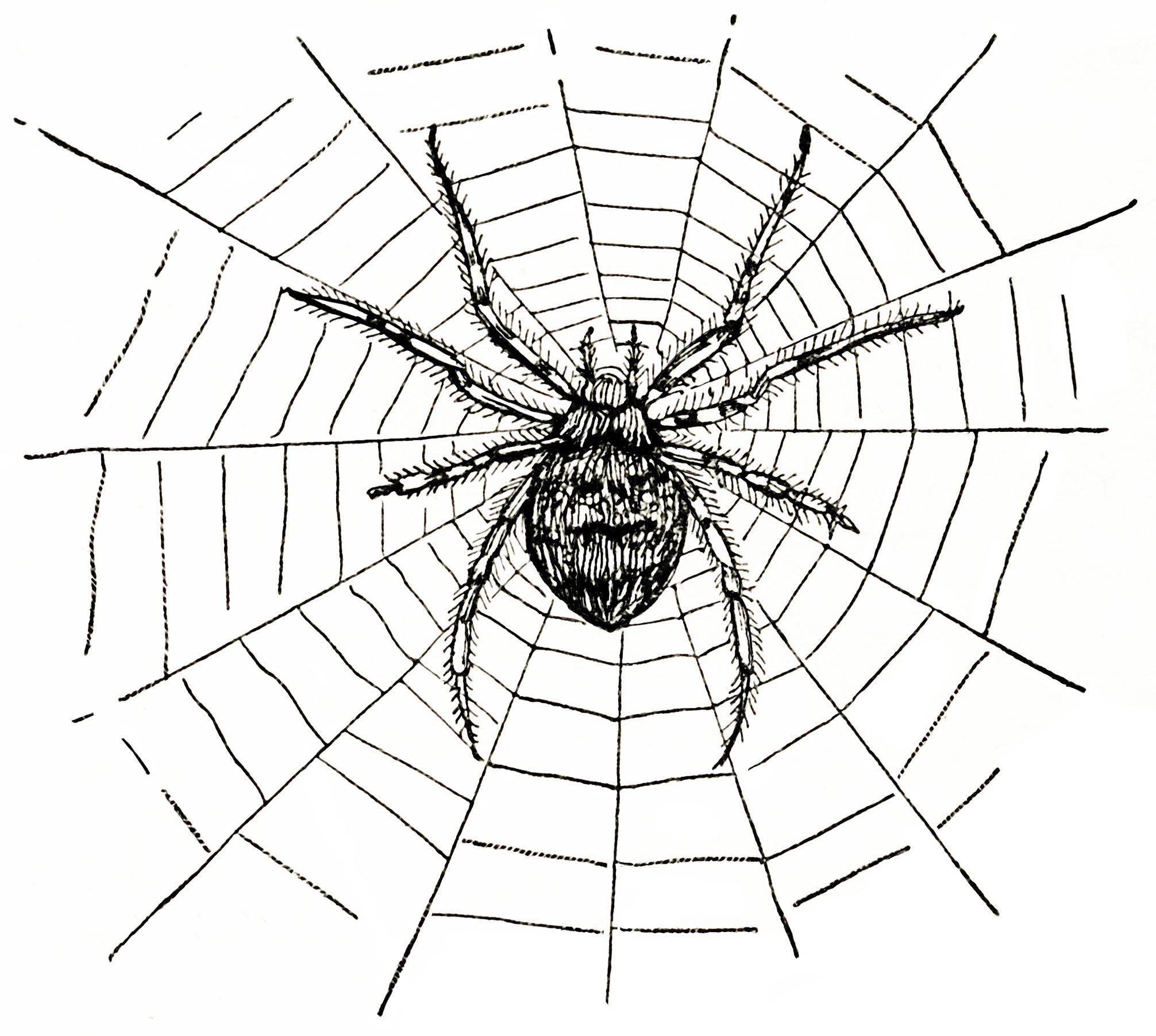 http://olddesignshop.com/wp-content/uploads/2012/09/OldDesignShop_SpiderOnWeb.jpg