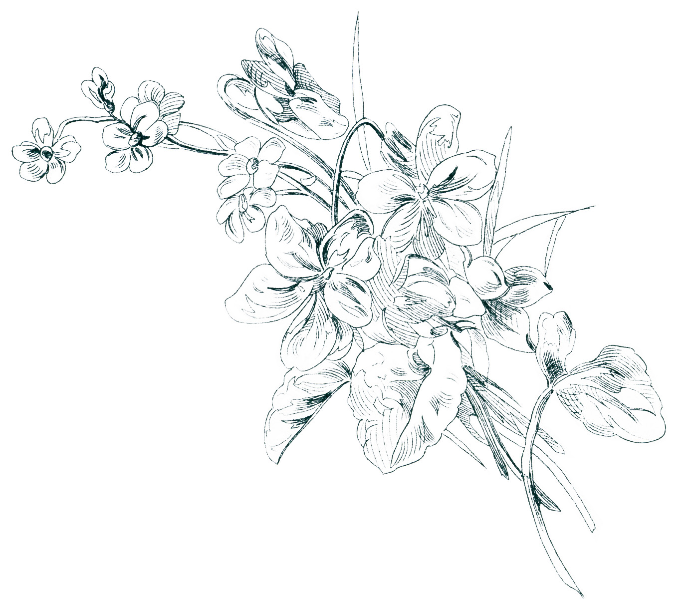 Free Vintage Image Floral Sketch | Old Design Shop Blog