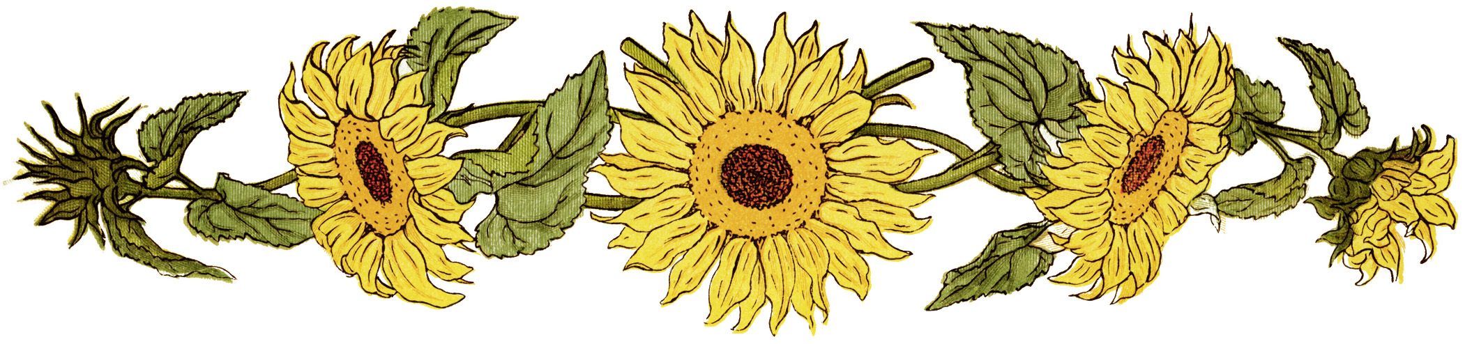 flower  sunflower clipart  free printable sunflower  sunflower graphicSunflower Images Clip Art
