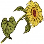 free digital image, kate greenaway flower, sunflower clipart, free printable sunflower, sunflower graphic