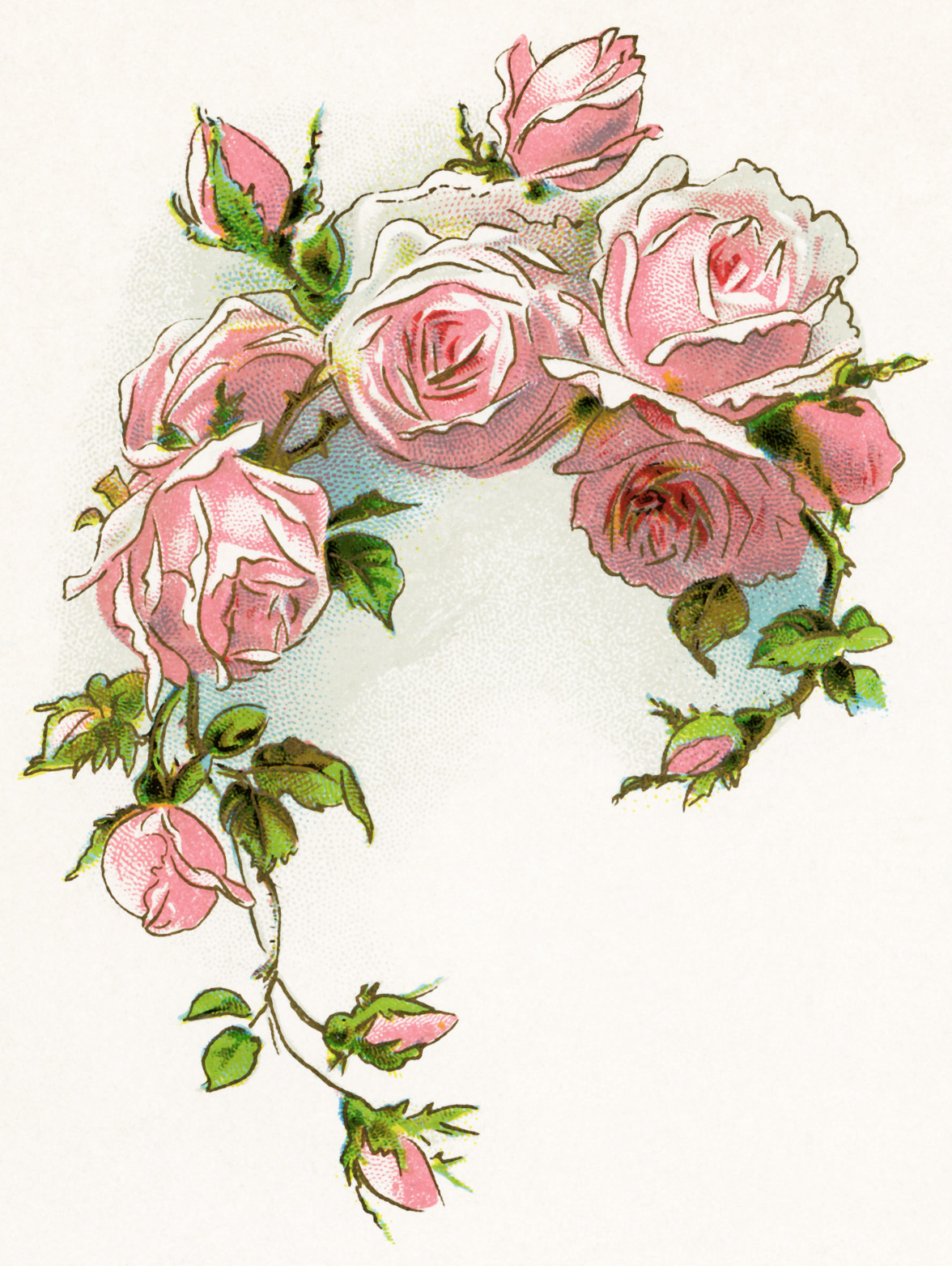 free vintage image, free vintage clipart rose, pink roses, roses and ...