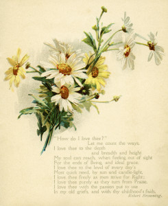 vintage daisy illustration, how do I love thee, Robert Browning, vintage flower clipart, old fashioned love poem