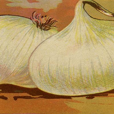 vintage seed packet, french seed label, onion seeds, white onion label, vintage ephemera, garden printable