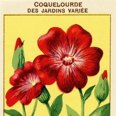 vintage french seed label, antique seed packet, vintage garden clipart, old flower graphics, coquelourde des jardins variee