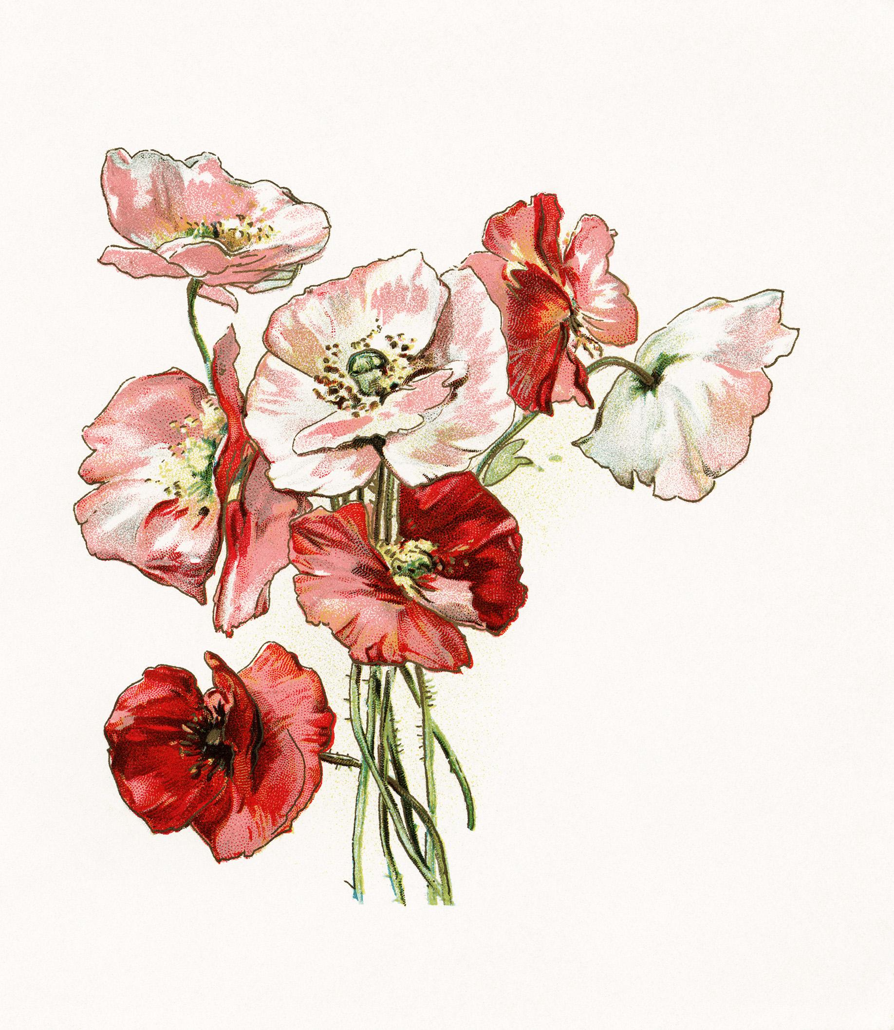vintage floral illustration - Download Free Vector Art ...