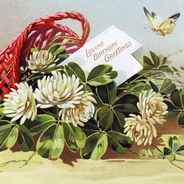 tuck's birthday postcard, white flower clover, basket of flowers, vintage postcard clipart, antique birthday image