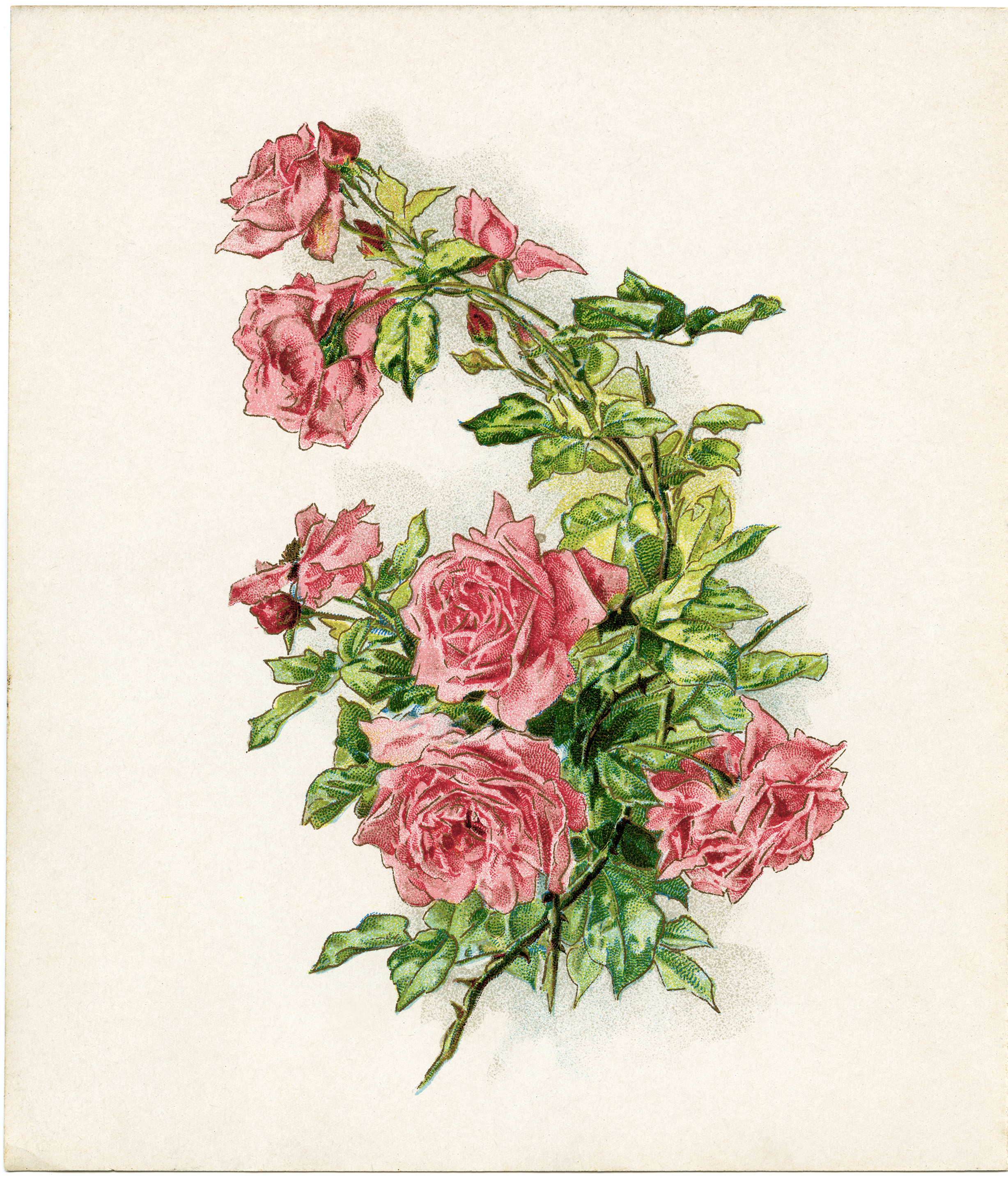 Free Vintage Image Branch Of Pink Roses