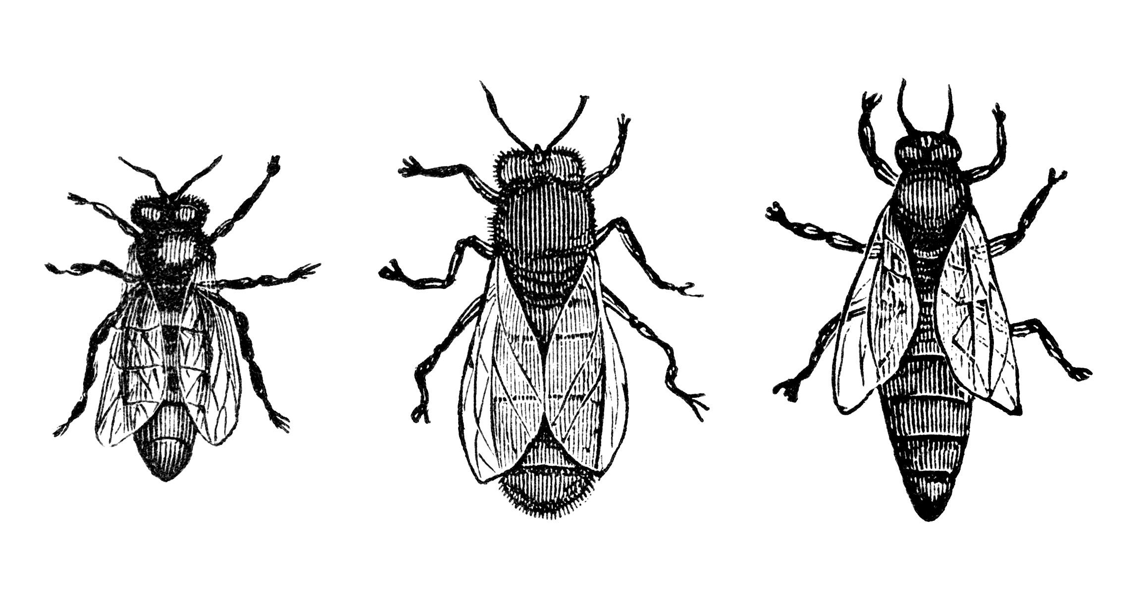 vintage bee clip art - photo #31