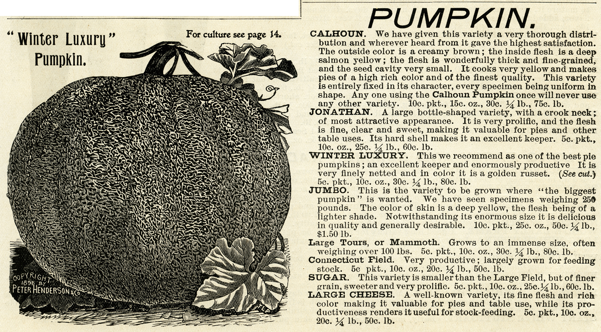 vintage pumpkin clip art - photo #31