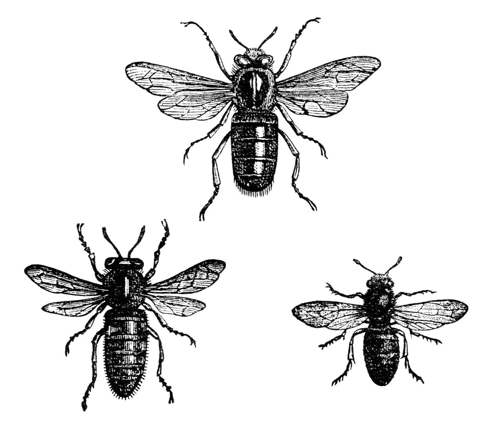 vintage bee clip art - photo #5