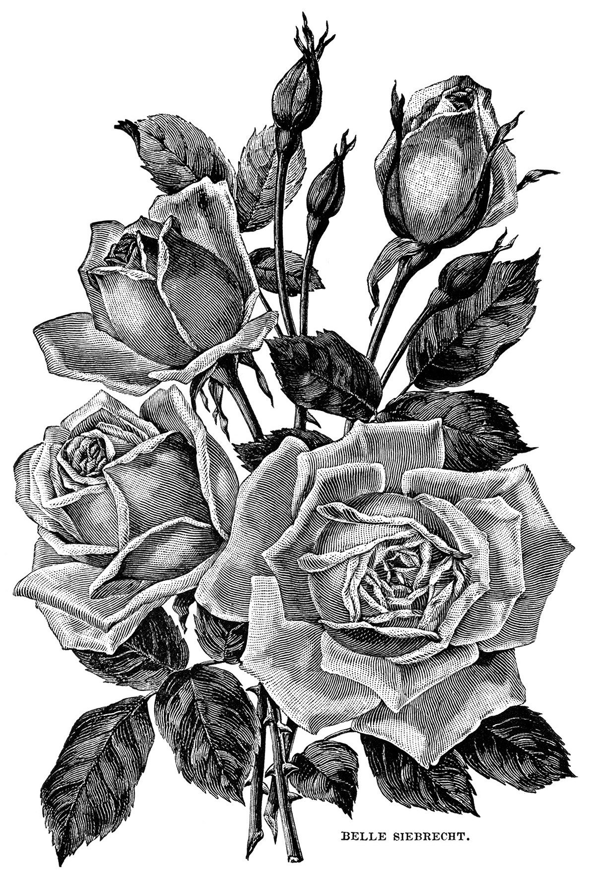 free clip art roses black and white - photo #39