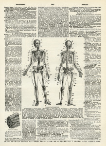 human bones diagram, skeleton clip art, black and white clipart, vintage dictionary page, halloween printable
