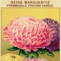 French seed packet, old fashioned seed package, vintage garden graphics, reine marguerite, queen daisy peony, vintage flower clipart