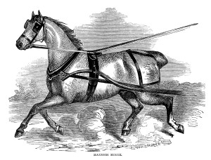 vintage horse engraving, farm animal clip art, black and white clipart, harness horse illustration, trotting horse graphics