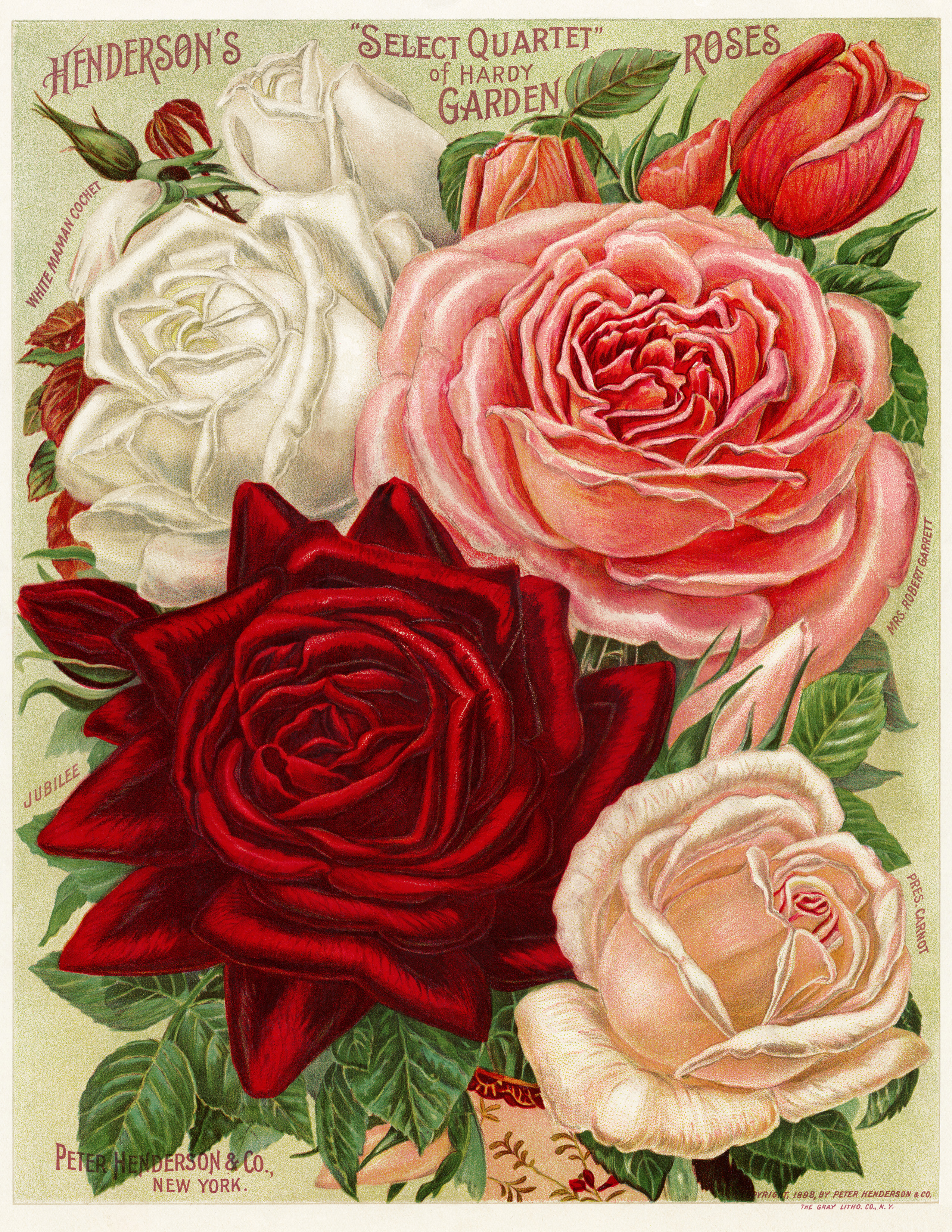 White pink and red roses free vintage image old for Free rose garden designs