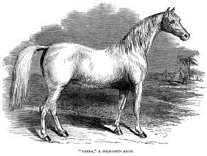 black and white clip art, farm animal clipart, arab horse illustration, vintage horse engraving, high bred arab horse image