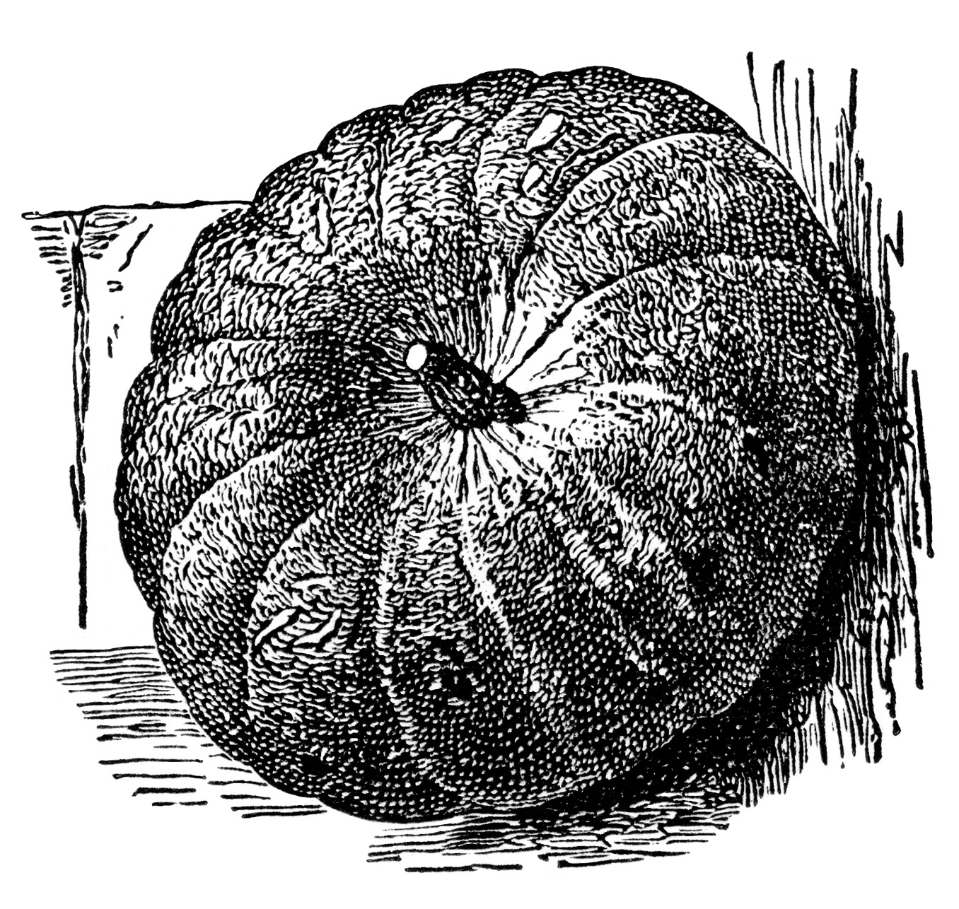 vintage pumpkin clip art - photo #9
