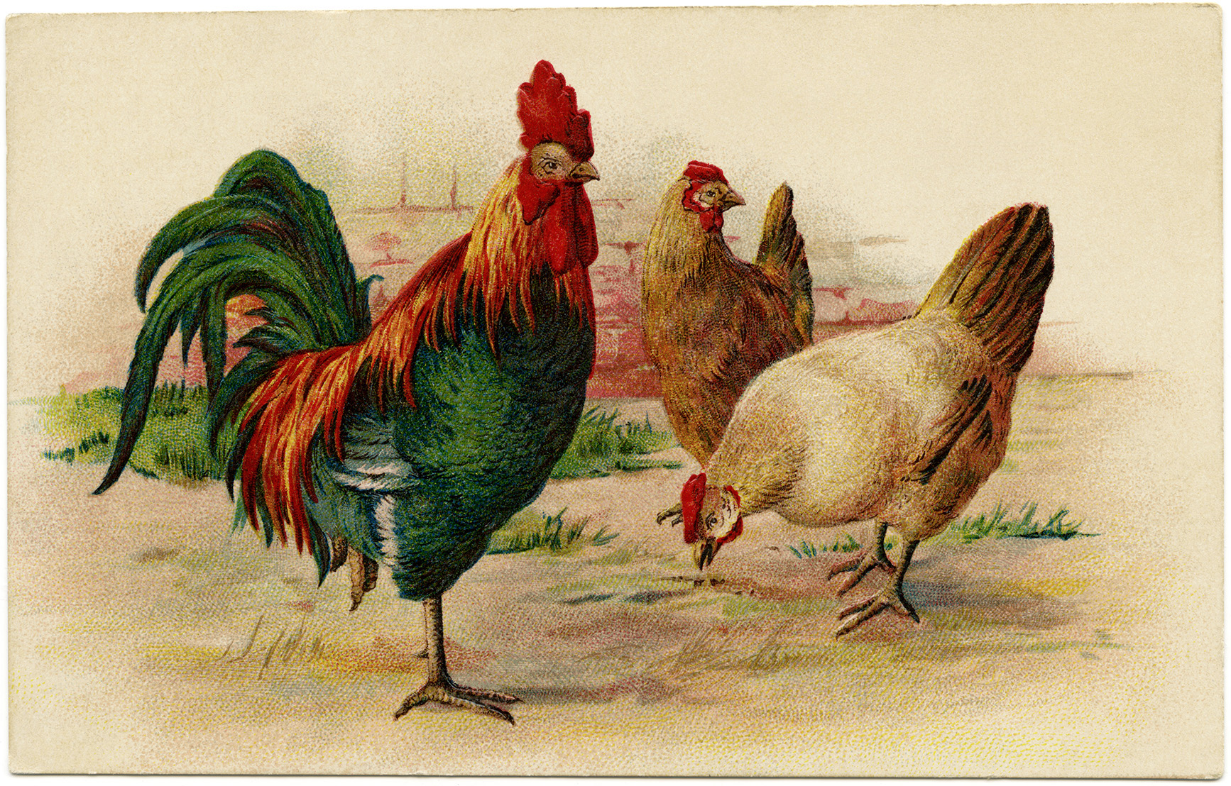 rooster and hens vintage image old design shop blog