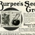 Free vintage clip art Burpees seed catalogue magazine advertisment