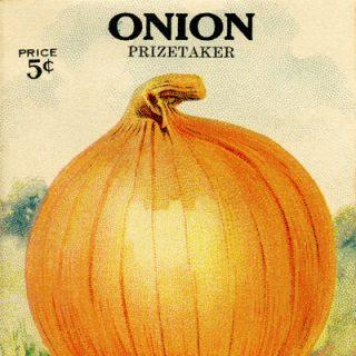 free vintage clip art garden seed packet onion de giorgi bros