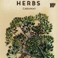 Free vintage clip art seed packet roudabush caraway herbs