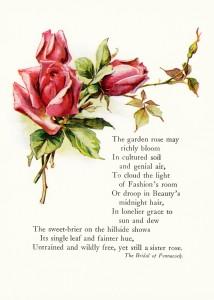 Free vintage poem illustrated red pink roses