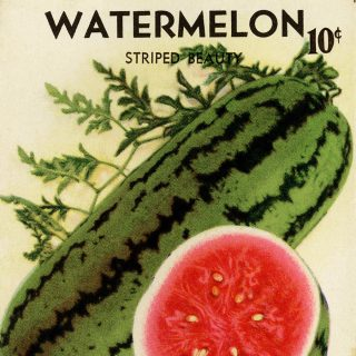 watermelon seed packet clip art