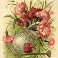 Free vintage clip art watering can filled with flowers birthday postcard image