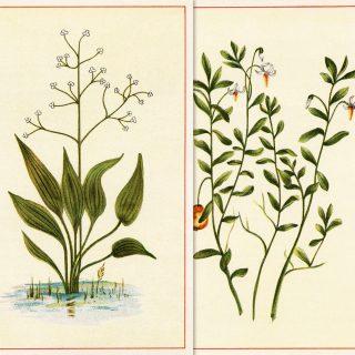 free botanical clip art