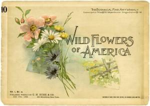 Victorian flower book, botanical fine art weekly, vintage book cover, vintage botanical image, wild flowers 1894