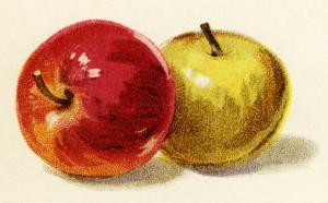Free vintage clip art illustration apples