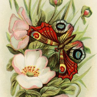 Free vintage clip art pink flowers butterfly birthday postcard
