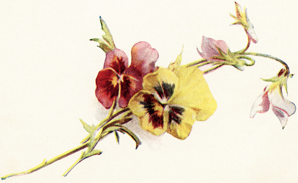 free vintage clipart flowers, red and yellow pansies vintage image, free printable flowers, floral vintage illustration