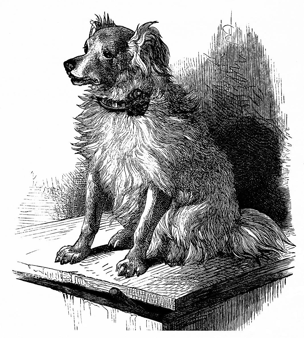 free vintage printable dog image, dog sketch, vintage dog illustration, free clipart dog, black and white dog image