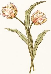 kate greenaway, vintage clipart flower, free tulip image, storybook flower, free vintage image flowers