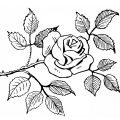 free vintage rose clip art illustration
