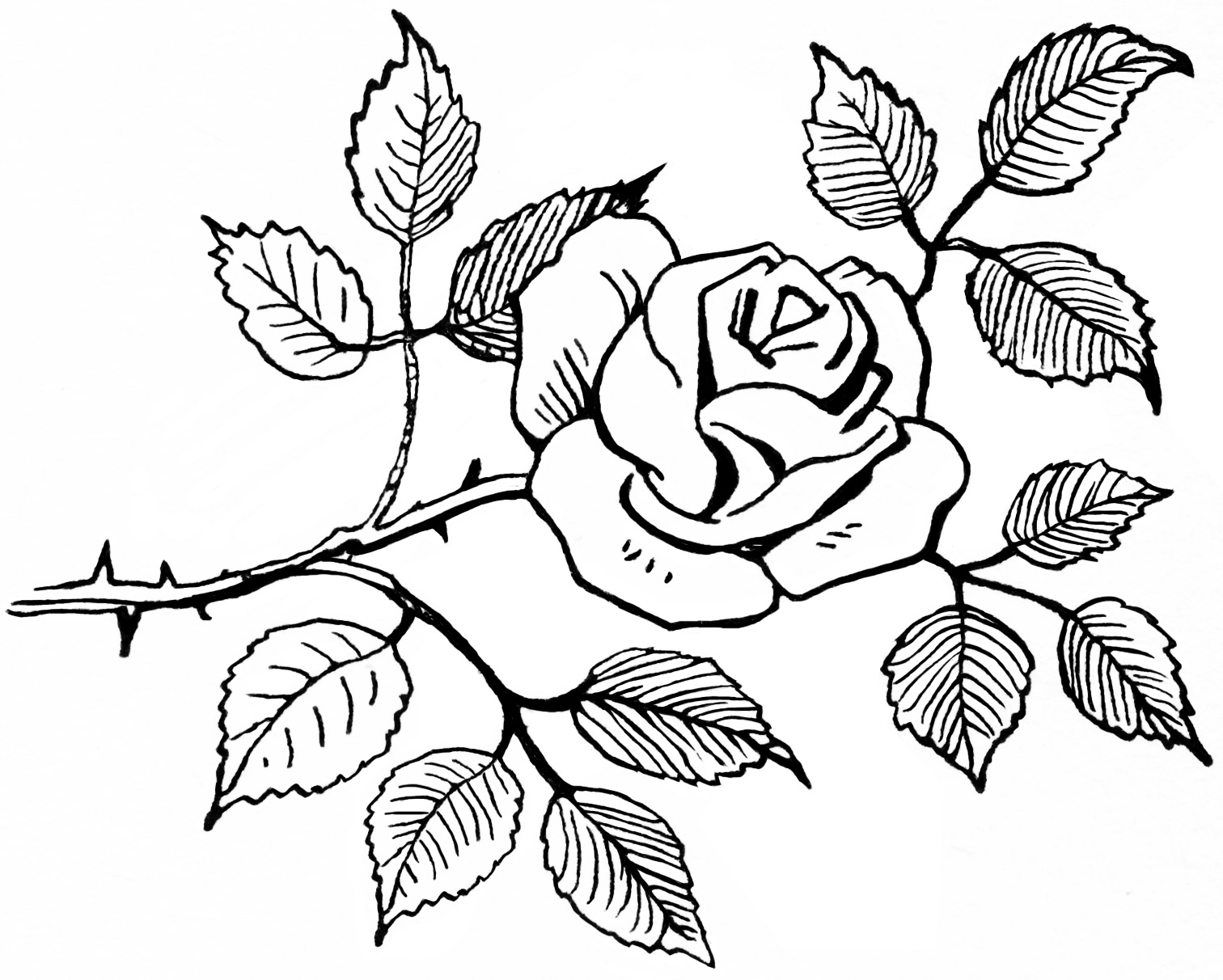 Line Art Rose Flower : Vintage rose clip art old design shop