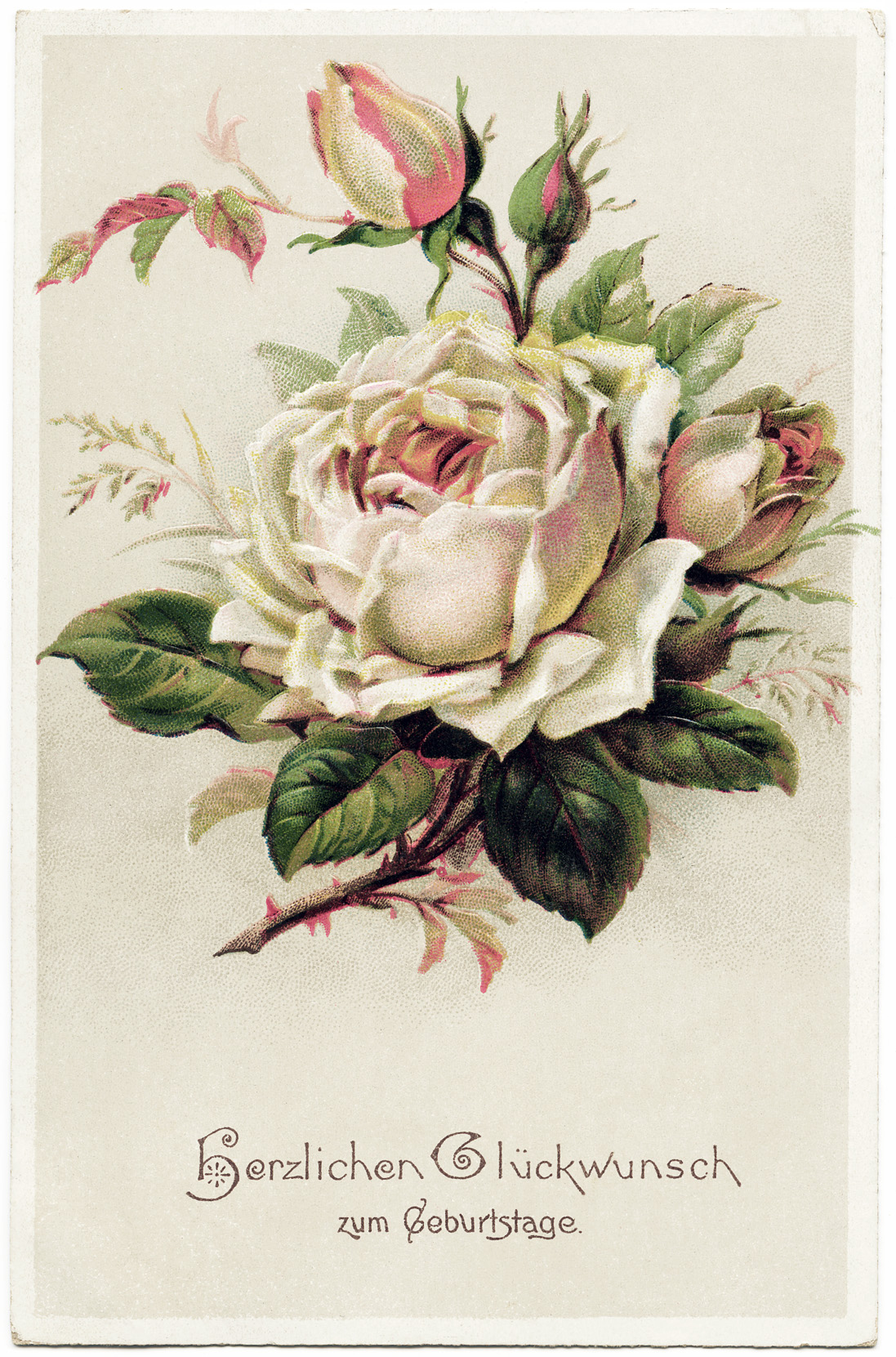 Free Vintage Clip Art Pink Rose German Postcard Old Design Shop Blog