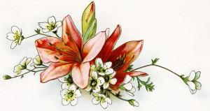 free vintage image, lilies vintage illustration, old floral image, vintage clipart flower, vintage clip art lily, floral cluster
