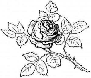 black and white clip art, digital rose graphic, printable rose image, vintage clipart flower, antique rose illustration