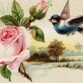 Free vintage clip art Victorian trading card blue bird pink flower