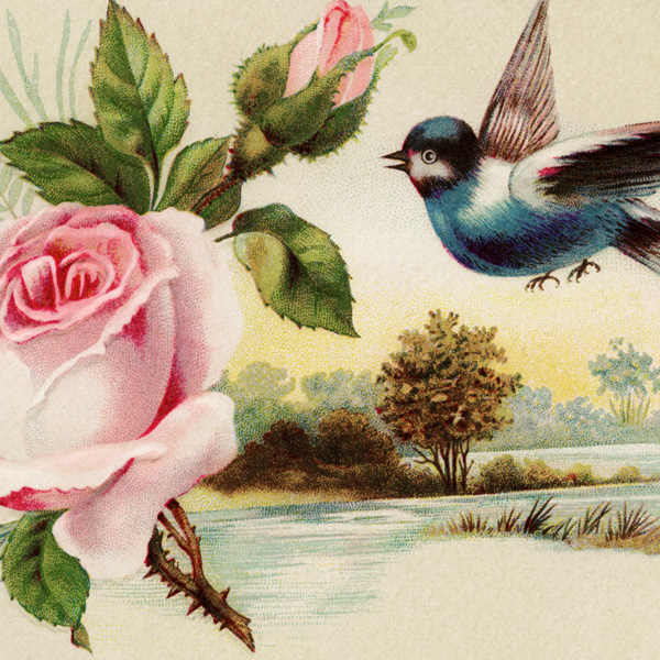 pink rose blue bird scenic victorian card   old design