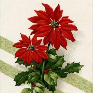 Free vintage clip art poinsettia new year postcard