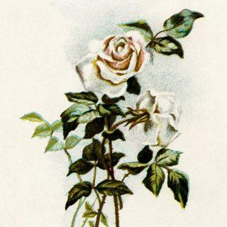 Free vintage rose poem clip art