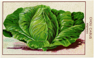 Free vintage clip art French cabbage seed packet label